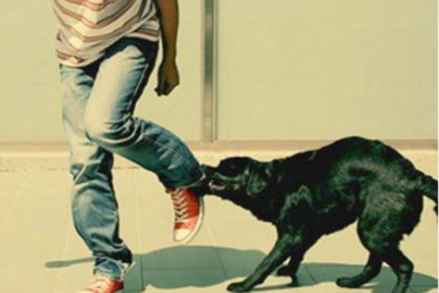 Mơ thấy chó cắn tay báo hiệu chuyện gì? Giải mã mới nhất 2020