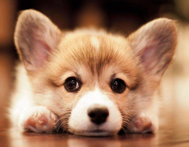 Mơ thấy chó con báo hiệu điềm lành hay dữ mới nhất 2020
