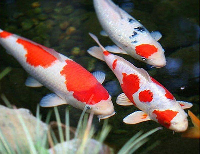 Tổng hợp ý nghĩa giấc mơ thấy cá mới nhất cho bạn