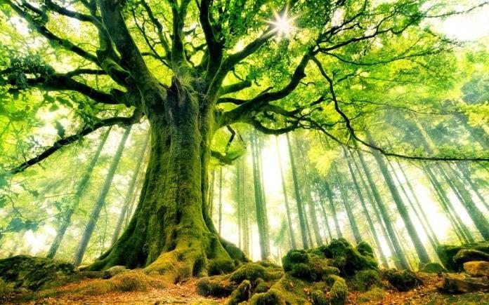 Tổng hợp ý nghĩa giấc mơ thấy cây cối mới nhất cho bạn