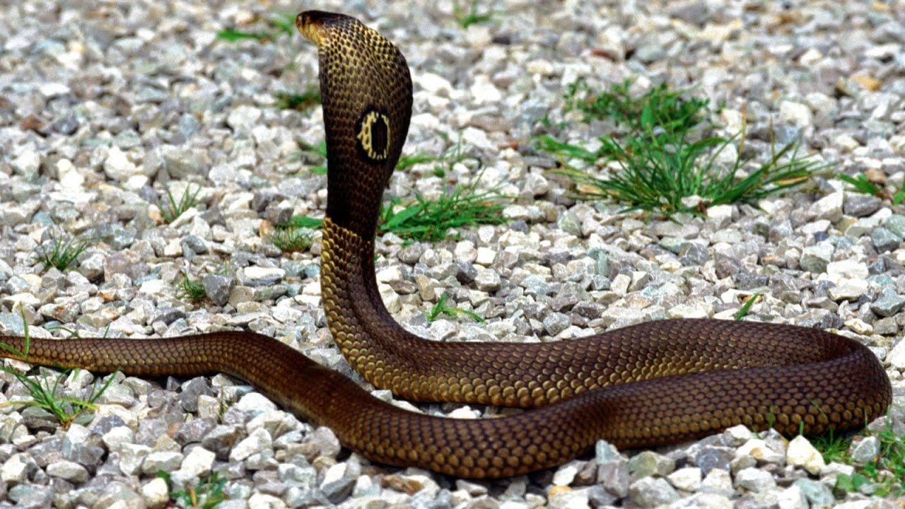 Giấc mơ thấy rắn