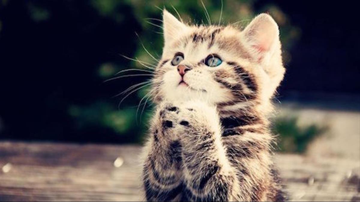 Giấc mơ thấy mèo